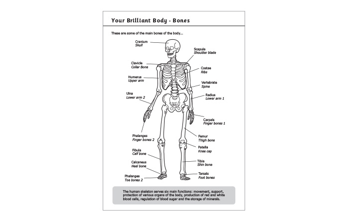 Primary Exercise Book Bespoke Information Pages